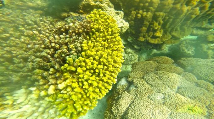 リペ島 ダイビング