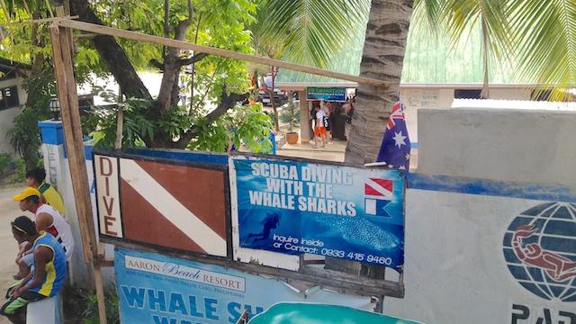 ジンベイザメと泳げるオスロブのホエールシャークウォッチングポイント