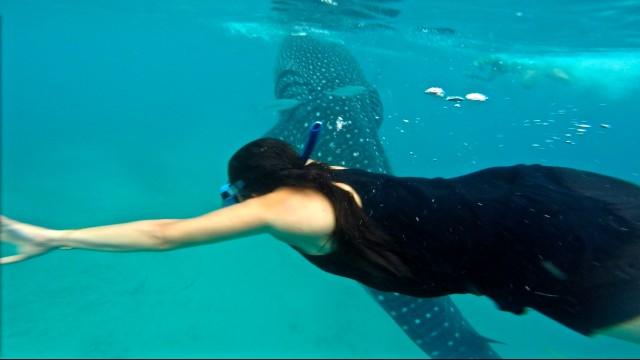 セブ島オスロブでジンベイザメと泳ぐツアー客