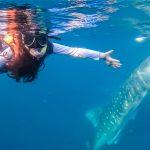 セブ島ジンベイザメツアーに安く参加する方法