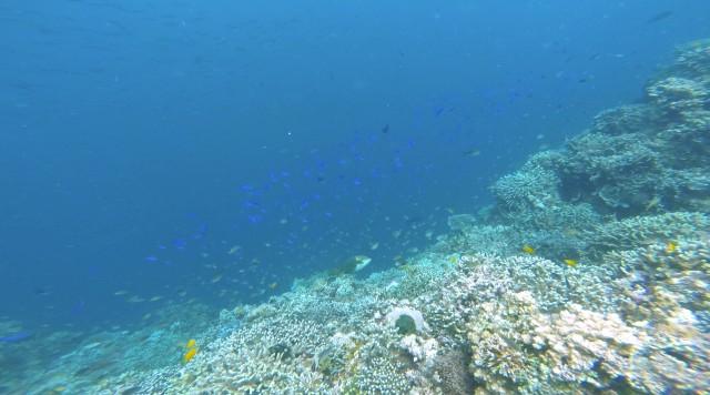 ボホールバリカサグ島