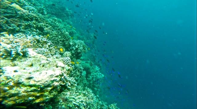 バリカサグ ダイビング