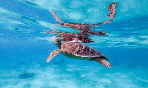 バリカサグ島アイランドホッピングツアー(ウミガメ)