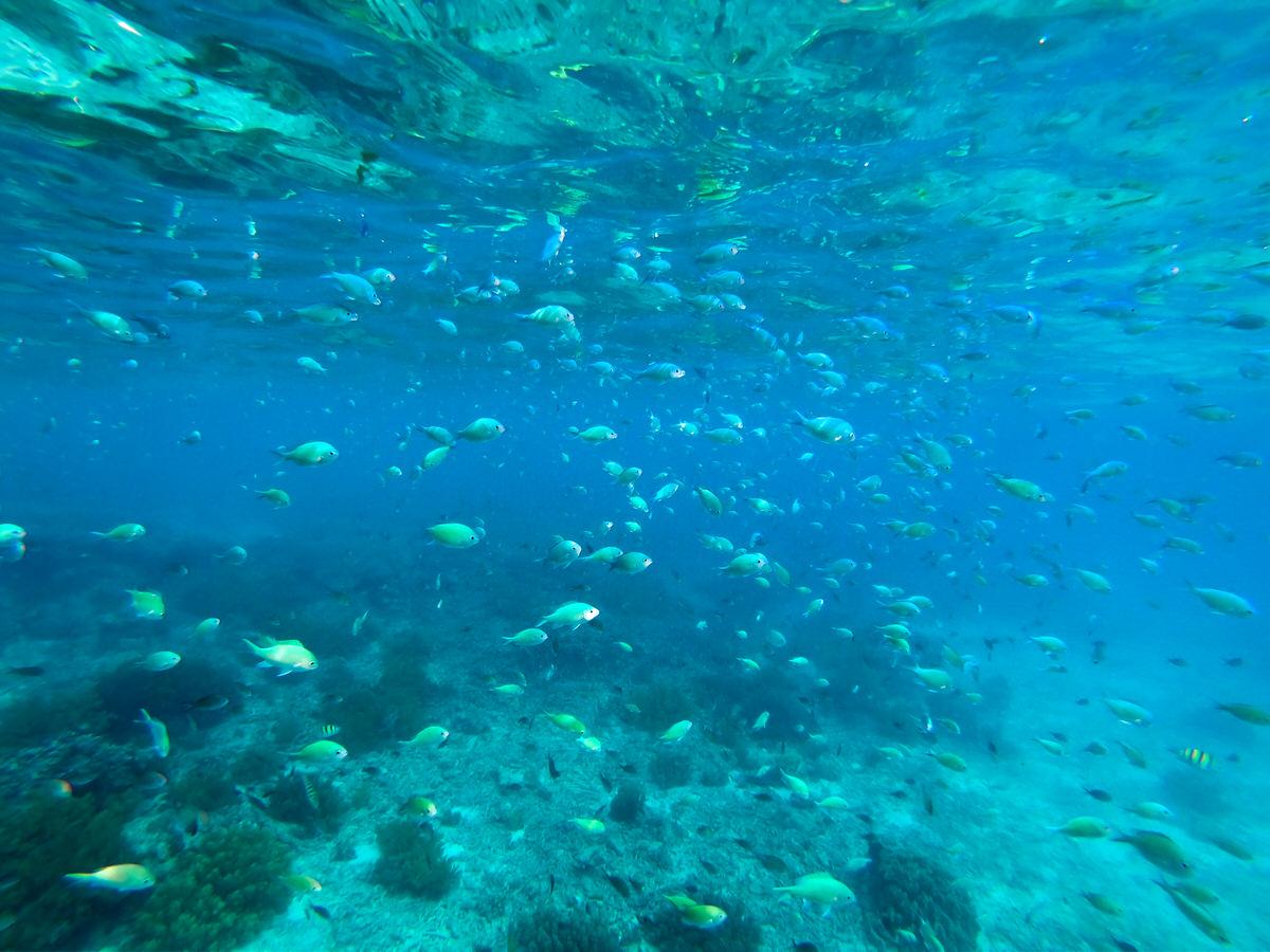 バリカサグ島でシュノーケリング