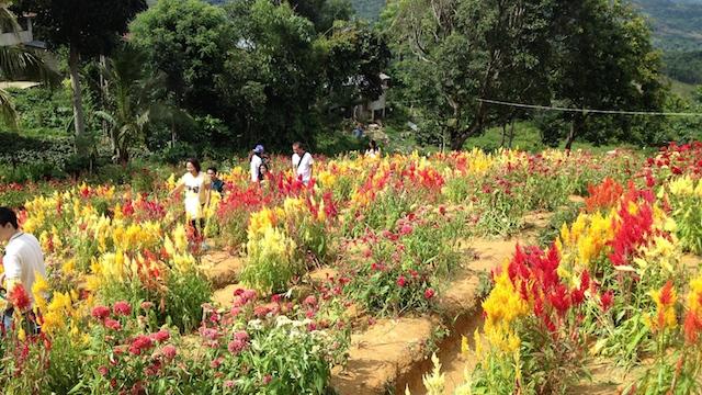 セブシラオ花畑写真撮影
