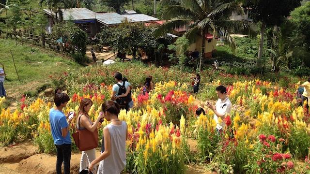 シラオ花畑