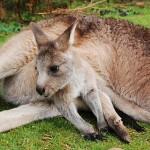 オーストラリア生活費ワーホリ1ヶ月