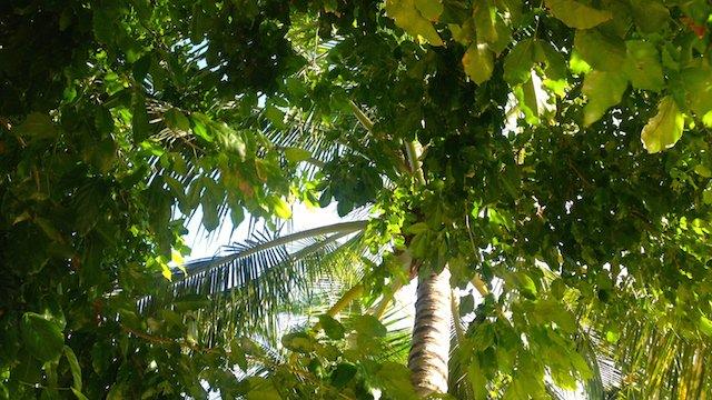 フィリピンセブ島オスロブおすすめの宿