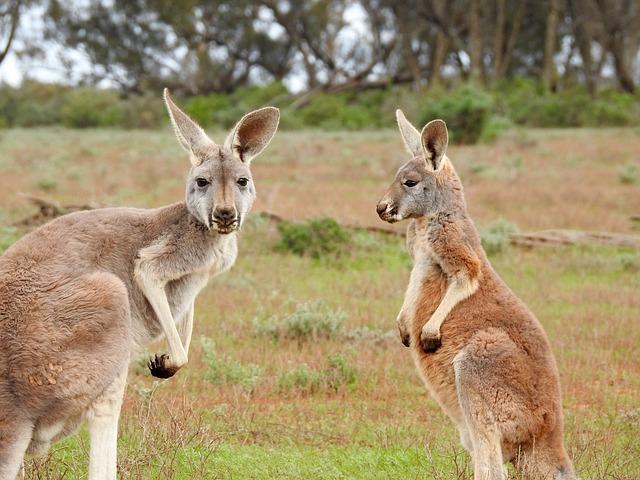 オーストラリア ワーホリ 所得税