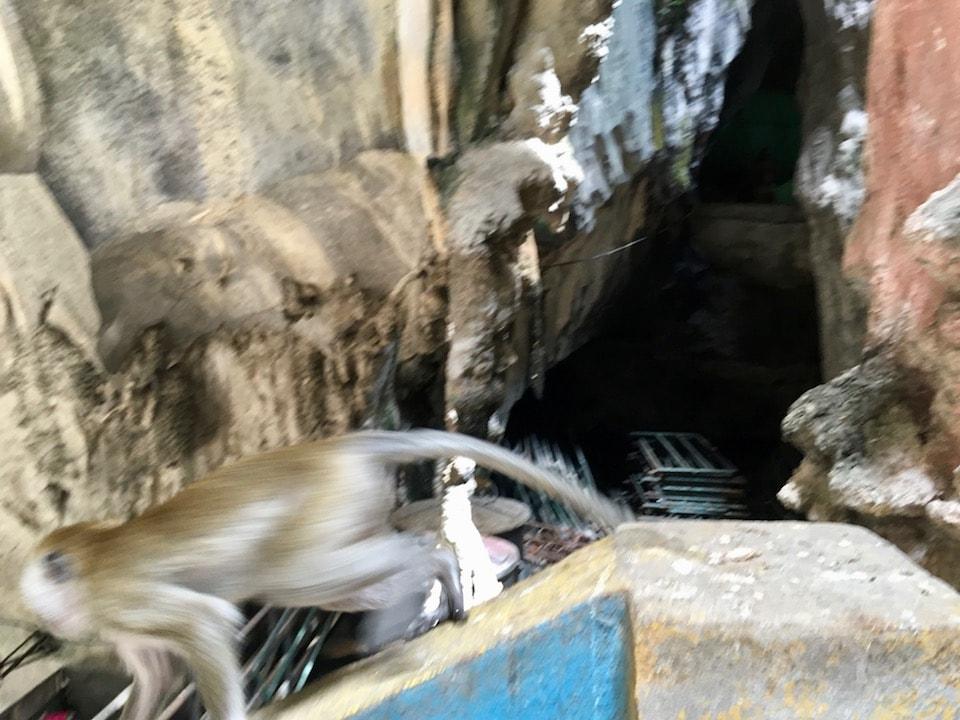 クアラルンプールのバトゥ洞窟のサル