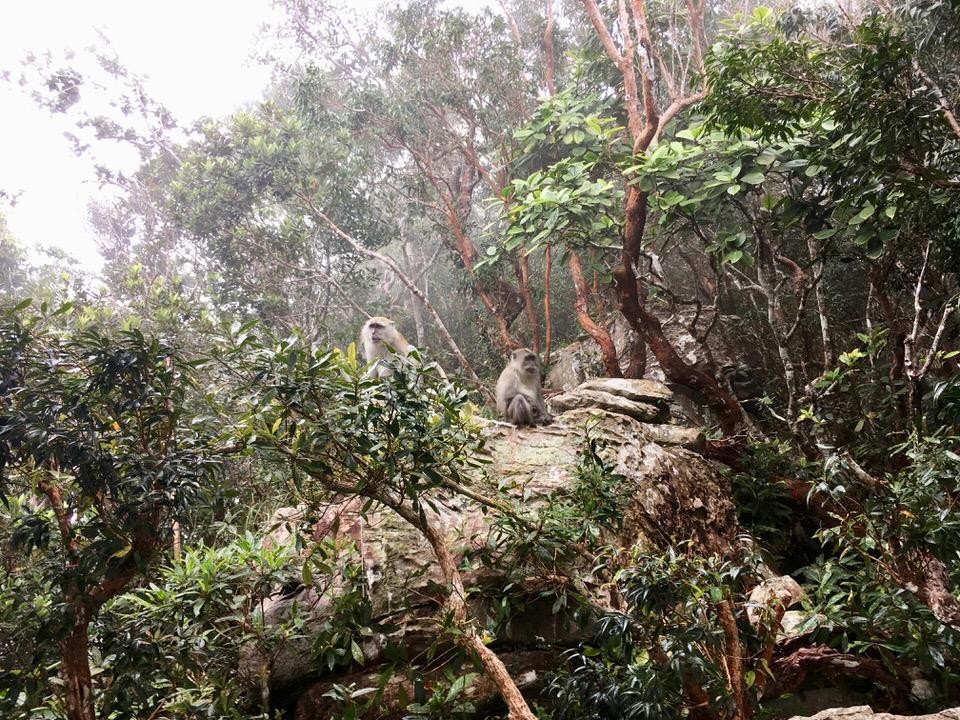 ランカウイ島にいる猿