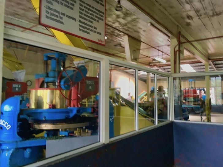 キャメロンハイランド名産の紅茶工場見学