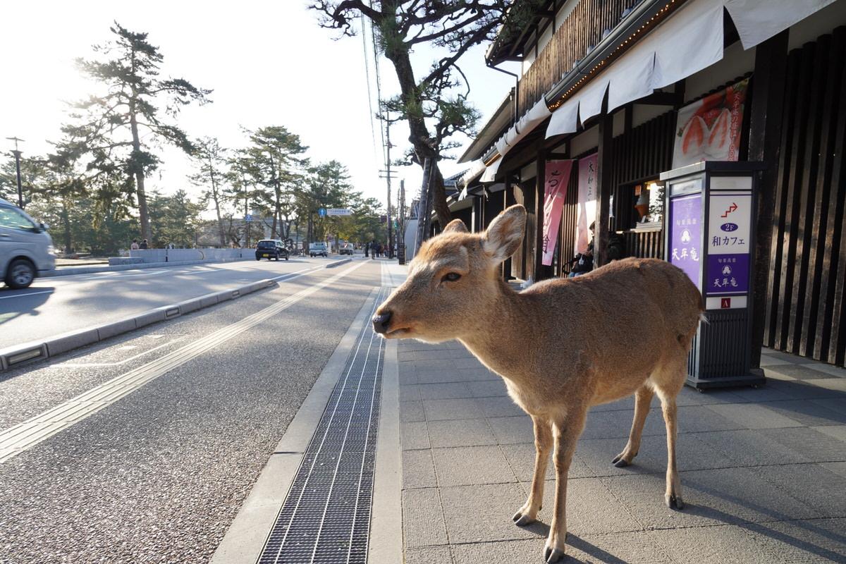 日本観光が初めて外国人と国内旅行